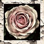 vintage rose domestic violence love