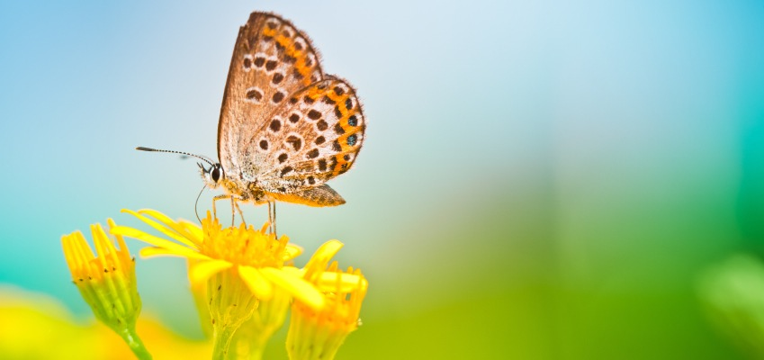 Domestic Violence Help Blog Butterfly