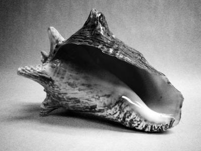 The Conch - A woman's inner conflicts