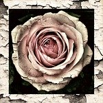 vintage rose domestic violence love